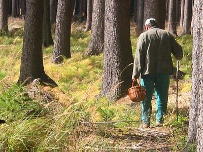 У лісі на Тячівщині знайшли труп грибника з вогнепальним пораненням (ВІДЕО)