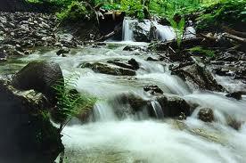 Екологічним еталоном України є Закарпаття