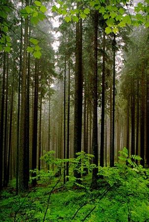 У лісі на Мукачівщині рятувальники відшукали групу туристів з дітьми, які заблукали у лісі