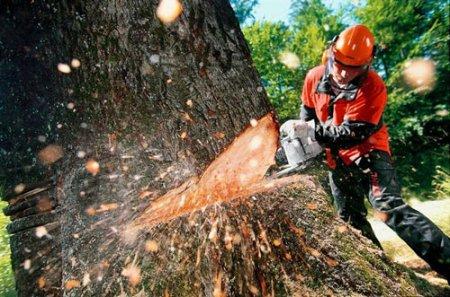 На Ужгородщині під час незаконної рубки лісу загинув чоловік