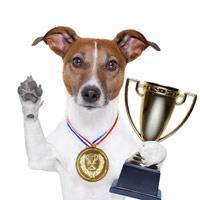 В Мукачеві відбулася обласна виставка собак усіх порід (ВІДЕО)