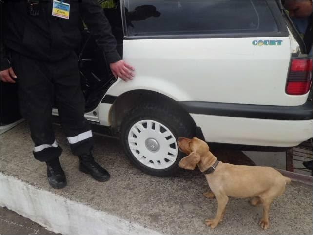 На Закарпатті вбили прикордонного собаку, який виявляв контрабандні цигарки