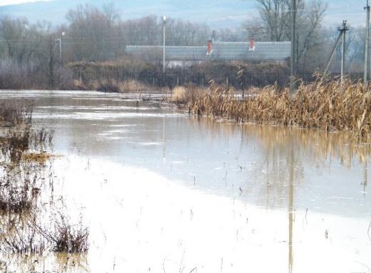 Знайдена в річці на Закарпатті мертва дівчинка виявилась громадянкою Румунії