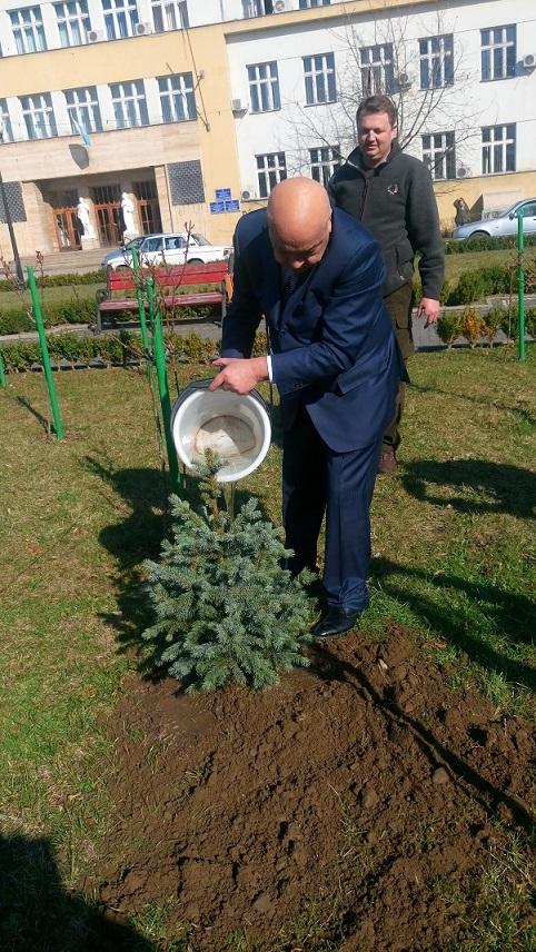 Москаль посадив перед ОДА ялинку, яка в майбутньому перетвориться на головну новорічну прикрасу Закарпаття ( ФОТО)
