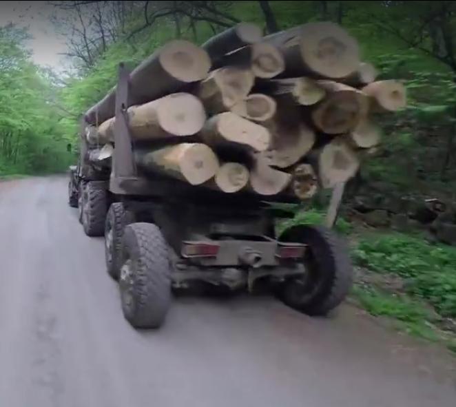 Жорстокі рубки на Ужгородщині продовжуються і в період тиші (відео)
