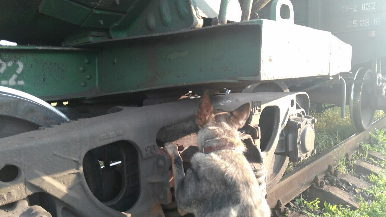 Закарпатські прикордонники знайшли у вантажному потязі приховані цигарки