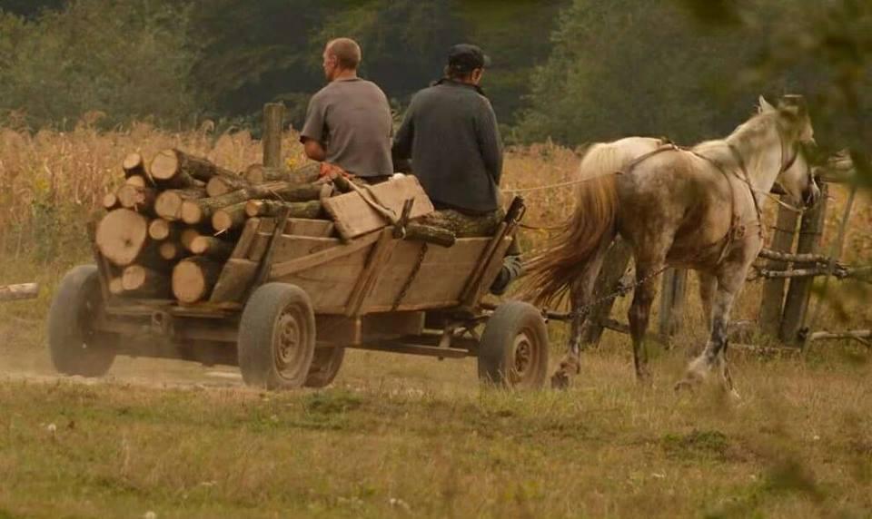 На Мукачівщині нелегальний ліс масово вивозять з допомогою возів (фото)