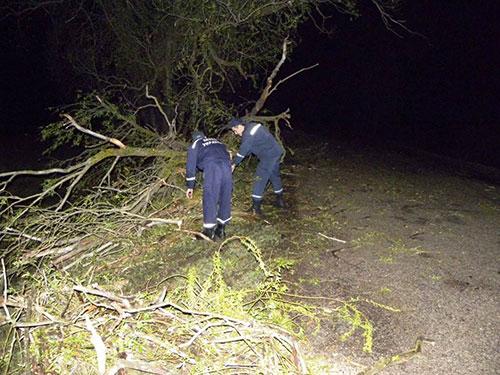 У Берегові через сильний вітер на дорогу впало дерево