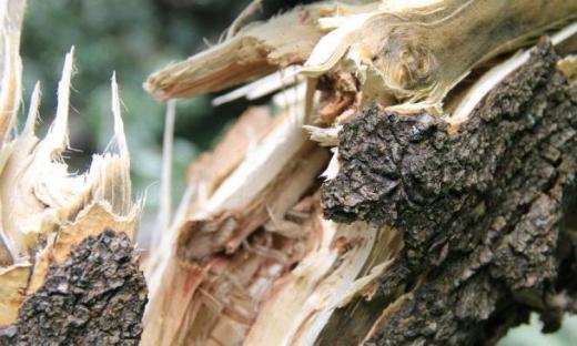 На Міжгірщині дерево впало на проїжджу частину