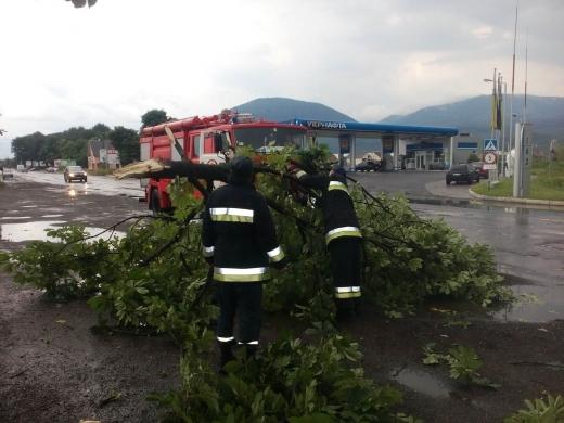 Негода влаштувала деревопад на Закарпатті