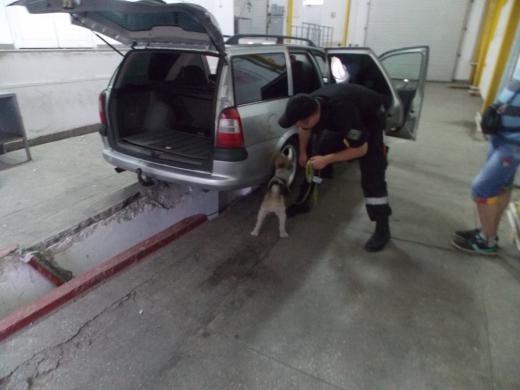Службовий собака допоміг закарпатським прикордонникам знайти тютюнову контрабанду