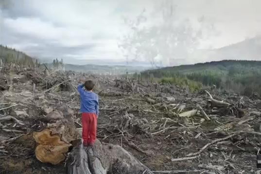 Як знищують ліси Ужгородщини (відео)