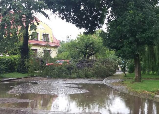 В Ужгороді під час грози впало дерево і перекрило дорогу (фото)