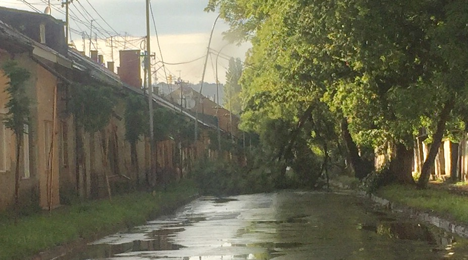 В Ужгороді дерево перегородило вулицю Шумну (фото)