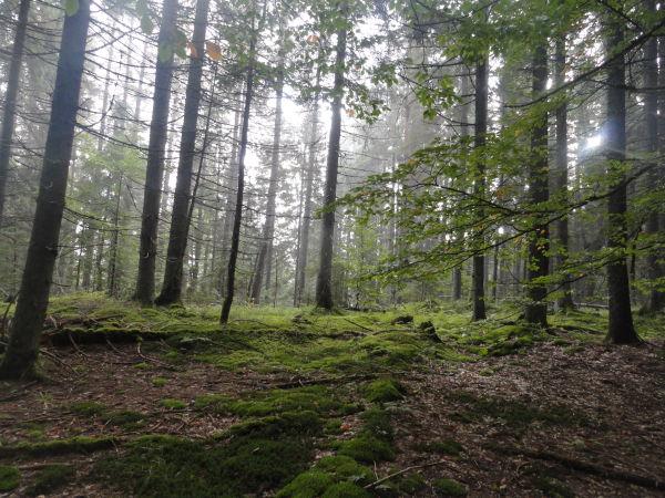 У лісі на Воловеччині загубився турист з Києва