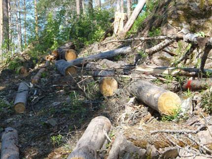 Хустське лісове господарство заплатить штраф за неналежне виконання обов'язків