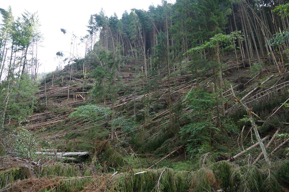 Буревій на Рахівщині повалив понад 71 га лісу (фото)