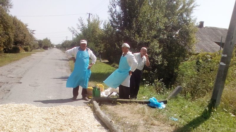 На Мукачівщині борються зі спалахом американської чуми свиней (фото)