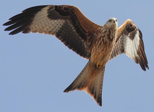 На Закарпатті створять реабілітаційний центр для хижих птахів