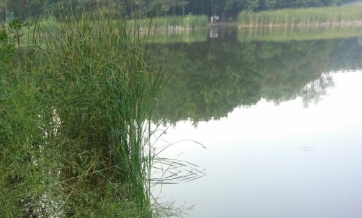 На Іршавщині у водоймі знайшли труп чоловіка