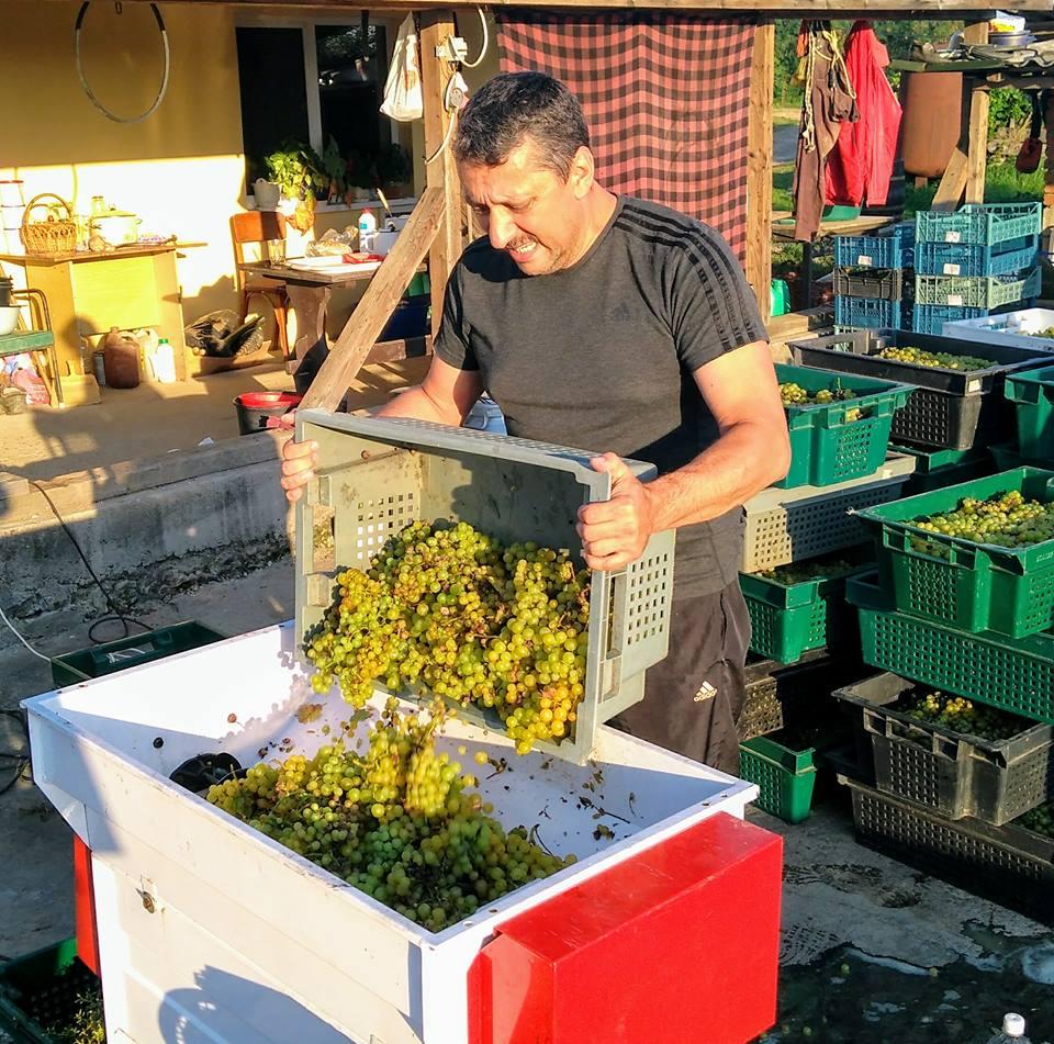 На Закарпатті відкрили виноробний сезон (фото)