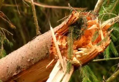 Негода понищила на Закарпатті майже тисячу гектарів лісу (ВІДЕО)
