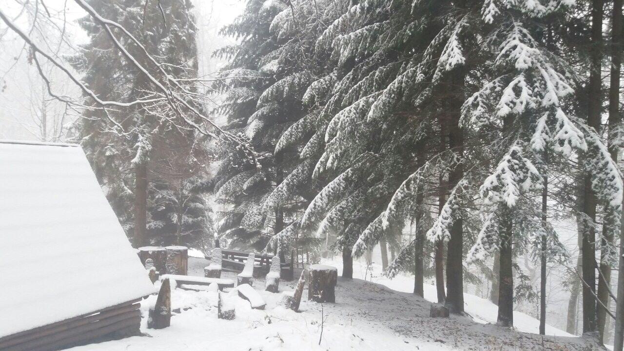 Букові праліси Карпат припорошило снігом (фото)
