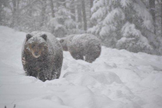 Закарпатські лісівники разом із WWF запускають перший в Україні проект зі збереження диких тварин