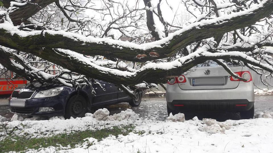В Ужгороді дерево впало одразу на два автомобілі
