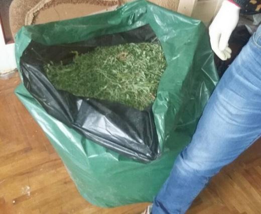 Вдома у двох мукачівців поліція знайшла майже 80 кг марихуани