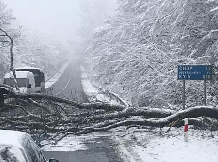 Через негоду на Закарпатті знову падали дерева