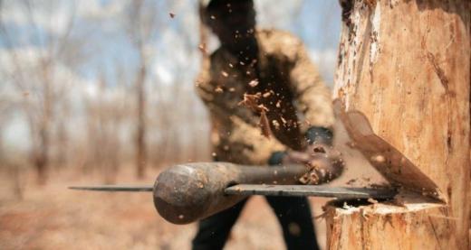 Тячівська прокуратура зареєструвала кримінальне провадження через незаконну вирубку дерев
