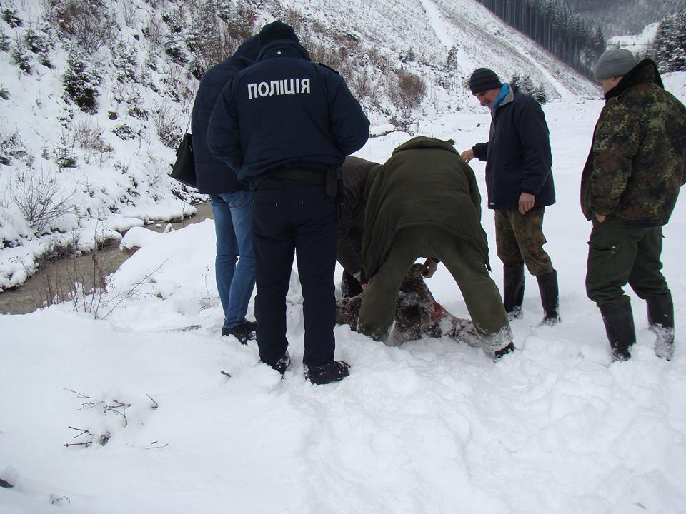Поліція підтвердила факт браконьєрства, яке заперечив головний лісник Закарпаття (фото)
