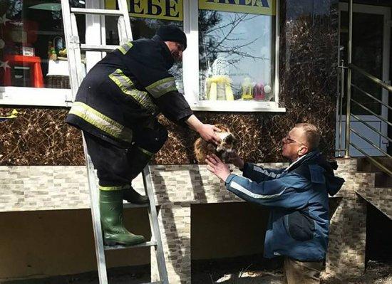 В Ужгороді врятували двох котів, які випали з балкону багатоповерхівки (ФОТО)