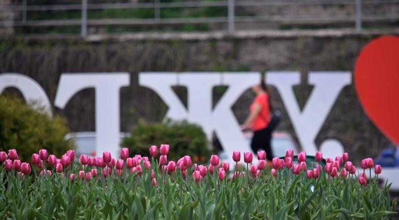Весняний Ужгород вражає сакурами та тюльпанами (фото)