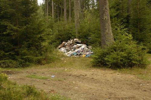 Закарпатців просять не смітити в лісах