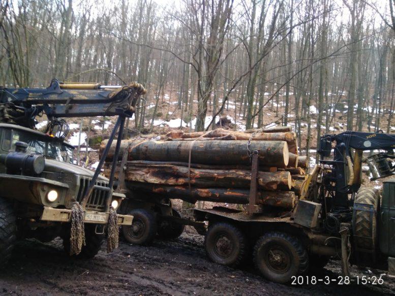 Під Ужгородом у військовому лісництві продовжуються масштабні вирубки лісу (фото)