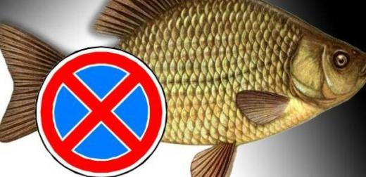 До уваги закарпатських рибалок – з 1-го квітня діє заборона на вилов риби