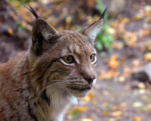 На Закарпатті порахували диких тварин