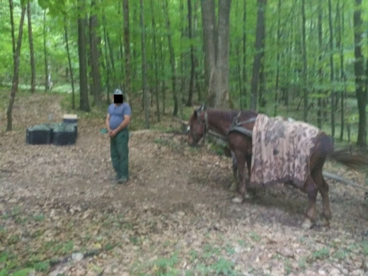 Закарпатець намагався перевезти цигарки до Румунії на конях