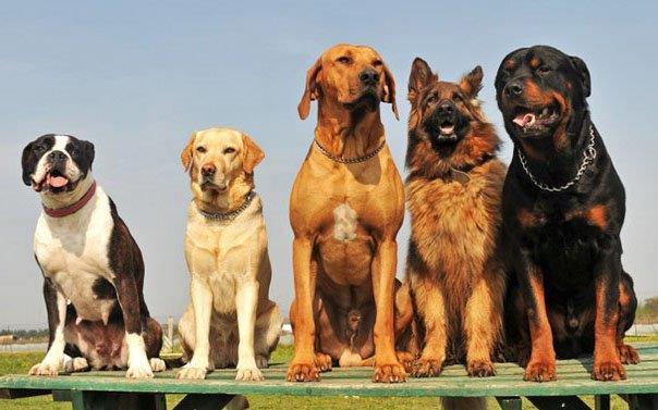 Цими вихідними в Ужгороді пройдуть одразу дві міжнародні виставки собак