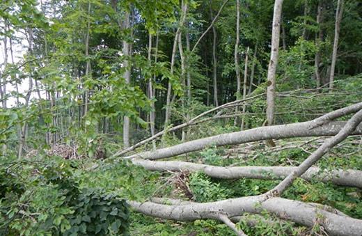 На Свалявщині буря повалила 7,5 гектарів лісу