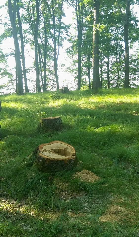 В Закарпатських лісах зменшилась кількість лісопорушень