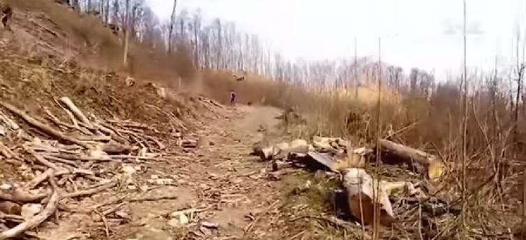 """Директор Свалявського лісгоспу став героєм """"Секретних матеріалів"""" (відео)"""