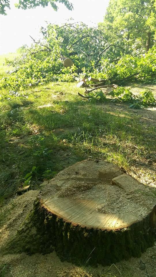 Через варварські вирубки лісів на Тячівщині голова громадської ради готовий скласти свої повноваження