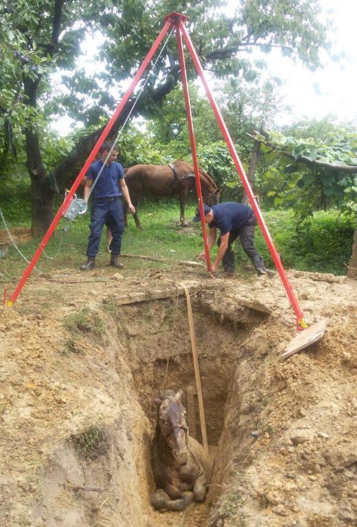 На Виноградівщині рятували коня, який впав у 3-метрову яму