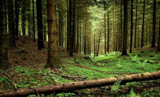 На Закарпатті у лісі заблукала 80-річна туристка з Києва