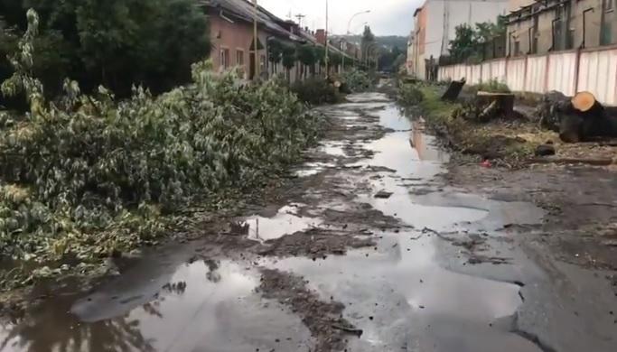 Замість ремонту вулиці Шумної в Ужгороді на ній варварськи порубали дерева (відео)