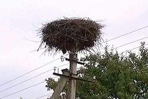 У селі на Ужгородщині знайшли вбитим лелеку (ФОТОФАКТ)