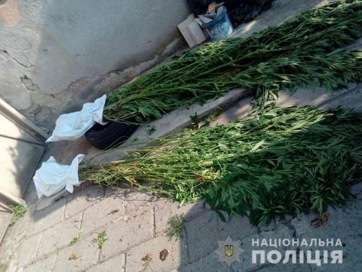 Мешканця Мукачева викрили на вирощуванні конопель